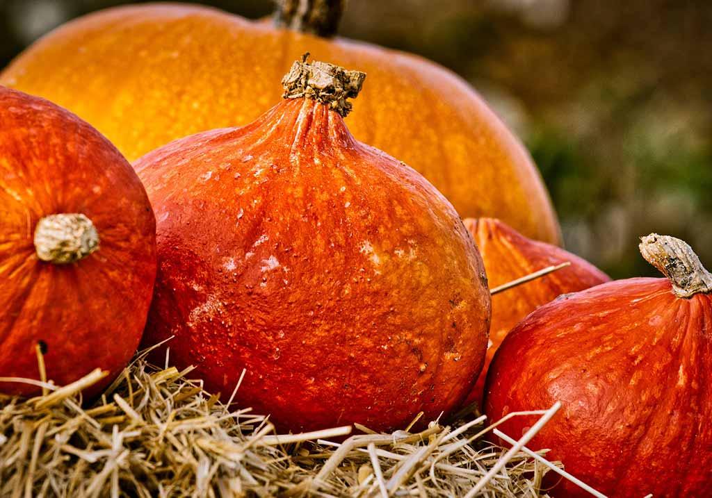 pumpkin-3726993_1920_web